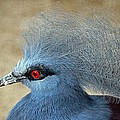 Common Crowned Pigeon by Cynthia Guinn