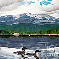 Common Loon On Togue Pond By Mount Katahdin by Stella Sherman