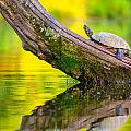 Common Map Turtle by Alexey Stiop