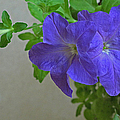 Common Morning Glory   #1313 by J L Woody Wooden