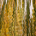 Common Reed Reflecting In Water by Heike Odermatt