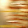Common Sword Ferns, Polystichum by Phil Schermeister