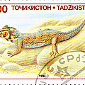 Common Wonder Gecko Lizard by Jim Pruitt