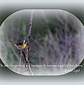 Common Yellowthroat - Bird by Travis Truelove