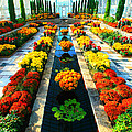 Como Conservatory's Fall Display. St Paul Minnesota. by Amanda Stadther