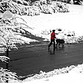Companions Walking On Christmas Morning by Sandi OReilly