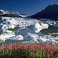 Composite View Of Colony Glacier W by Jeff Schultz