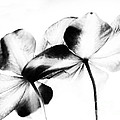 Petal Abstract by Denise Woldring