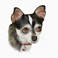 Computer Generated Portrait Of A Dog by Angela A Stanton