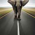 Heavy Duty Transport / Travel By Road by Johan Swanepoel