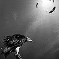 Conceptual - Vultures Awaiting by Johan Swanepoel