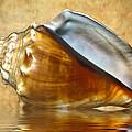 Conch 2 by Steve Harrington