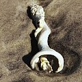 Conch Shell Spiral by Sharon Woerner