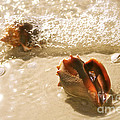 Conchs In Surf 2 Antique by Olivia Novak