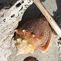 Conchs With Driftwood I by Olivia Novak