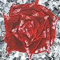 Concrete Rose  by Aliya Michelle