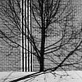 Concrete Tree II by Kenneth Ortiz