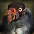 Condor 1 by Ingrid Smith-Johnsen