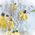 Coneflower And Bee 1  by Susan McMenamin