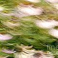 Coneflowers In The Breeze by Paul W Faust -  Impressions of Light