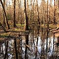 Congaree Reflections by Adam Jewell