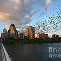 Congress Avenue Bats by Randy Smith