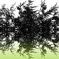 Conifer Lime by Sharon Lisa Clarke