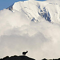 Contemplating Mont Blanc by Mircea Costina Photography