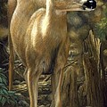 Mule Deer - Contemplation by Crista Forest