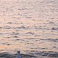 Contemplative Seagull by Sylvia Herrington