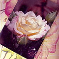 Continuation From Print To Photo Of White Rose by Anne-Elizabeth Whiteway