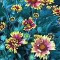 Contrasting Colors Orignial by Ernie Echols