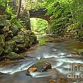 Cook Forest Stream Under The Bridge by Adam Jewell
