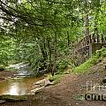 Cook Forest Toms Run Steps by Adam Jewell
