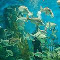 Cool Aquarium by Ray Warren
