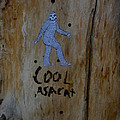 Cool Asacat by Kirk Griffith