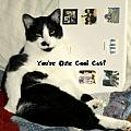 Cool Cat Greeting Card by Kathy Barney