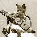 Cool Cat Playing A Guitar Circa 1900 Historical Photo By Photo  Henry King Nourse by California Views Mr Pat Hathaway Archives