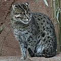 Cool Cat by Steve Wilkes