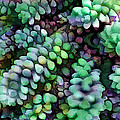 Cool Hued Burro's Tails In The Hot Desert by Elaine Plesser