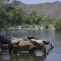 Cooling Off by Lorraine Harrington