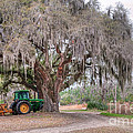 Coosaw Cross Roads With Live Oak by Scott Hansen