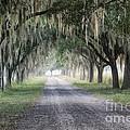 Coosaw Fog Avenue Of Oaks by Scott Hansen