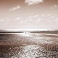 Copper Beach by Andy Readman