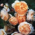 Copperblush by RC DeWinter