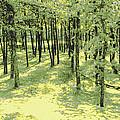 Copse Of Trees Sunlight by Tom Wurl