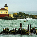 Coquille River Lighthouse And Birds by Priscilla Burgers