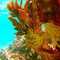 Coral Fern by Michael Urbain