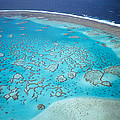 Coral Reef Capricornia Cays Np by D. & E. Parer-Cook
