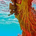 Coral Reef Fern by Michael Urbain